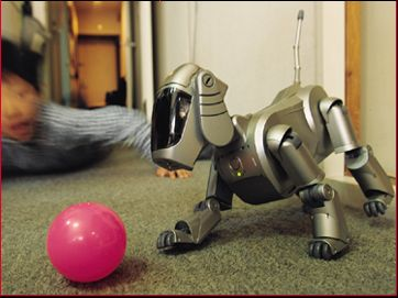 robot dog aibo sony comforts elderly in nursing home